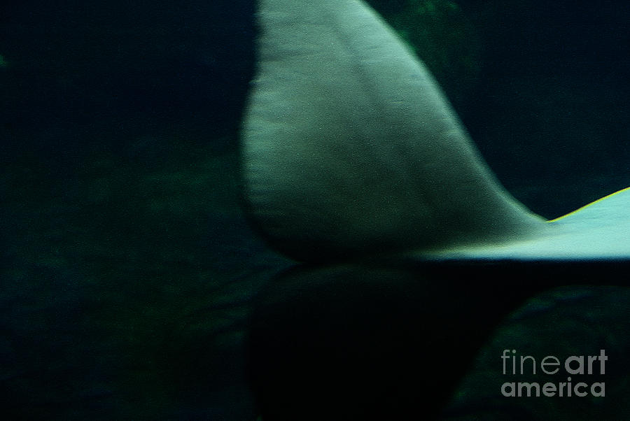 Whale Photograph - A Whales Tale by Linda Knorr Shafer