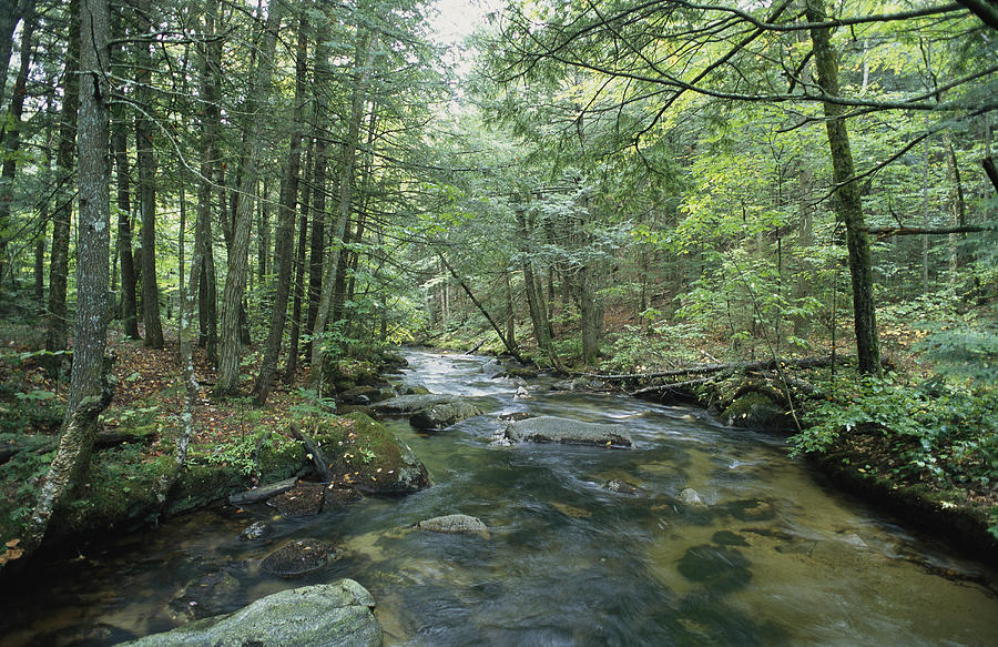 United States Of America Photograph - A Woodland View With A Rushing Brook by Heather Perry