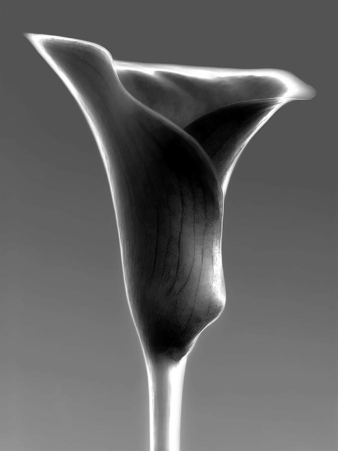 Abstract Calla Flower Photograph