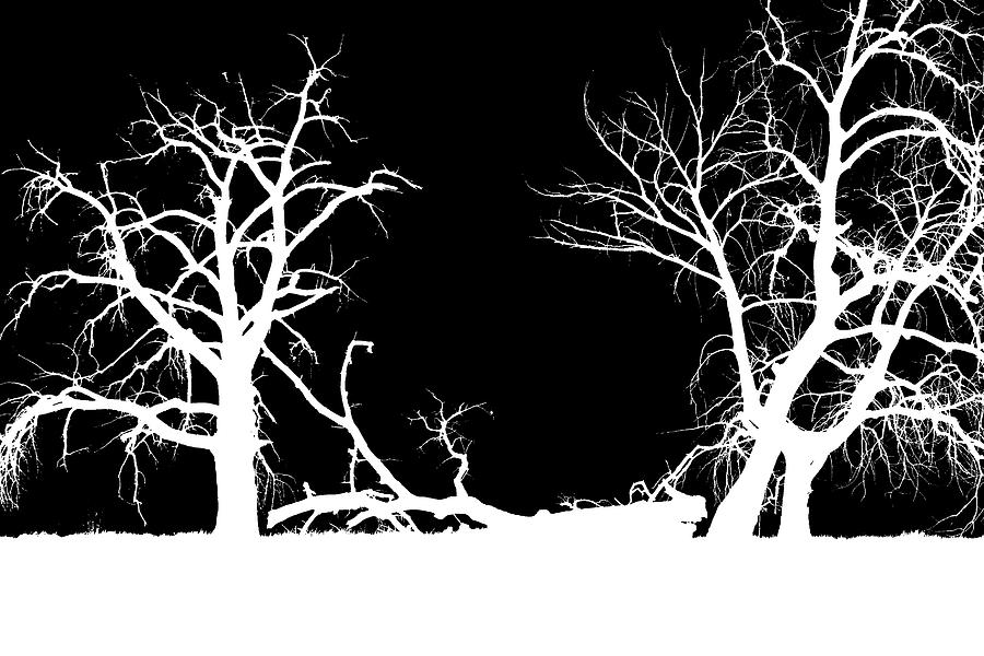 Contrast Element Of Art : Abstract high contrast twin trees photograph by mike