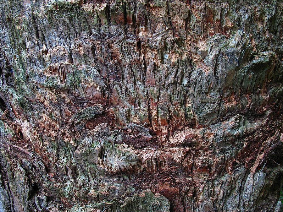 Abstract Tree Bark Photograph