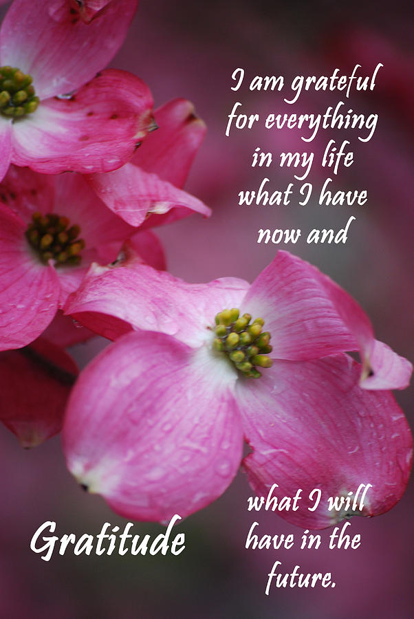 Affirmation Photograph - Affirmation Series - Gratitude by Michelle  BarlondSmith