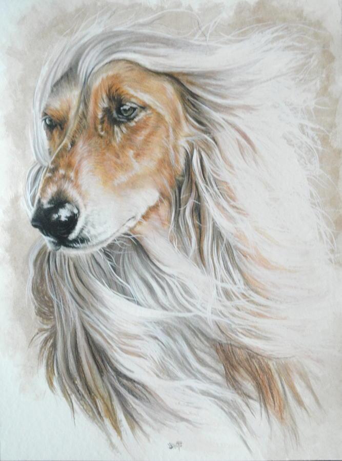 Afghan Hound Painting by Barbara Keith