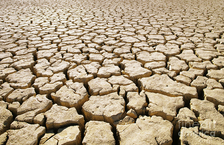 Africa Cracked Mud Photograph