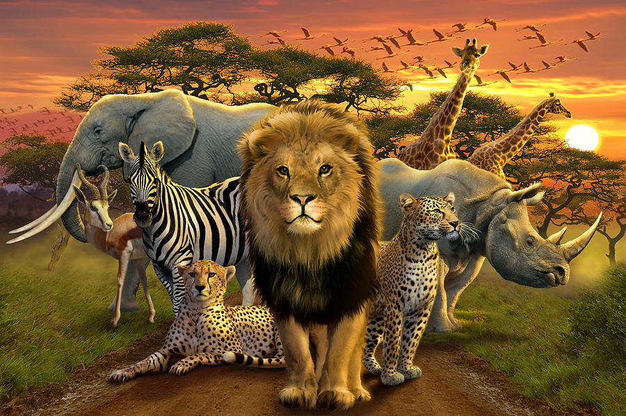 African Beasts Photograph