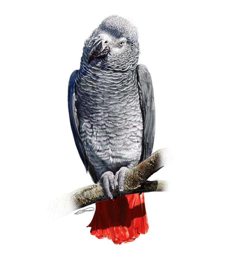 African Grey Parrot C Digital Art By Owen Bell