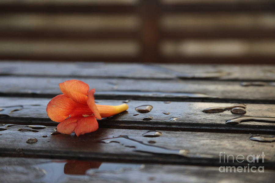 After The Rain .... Photograph