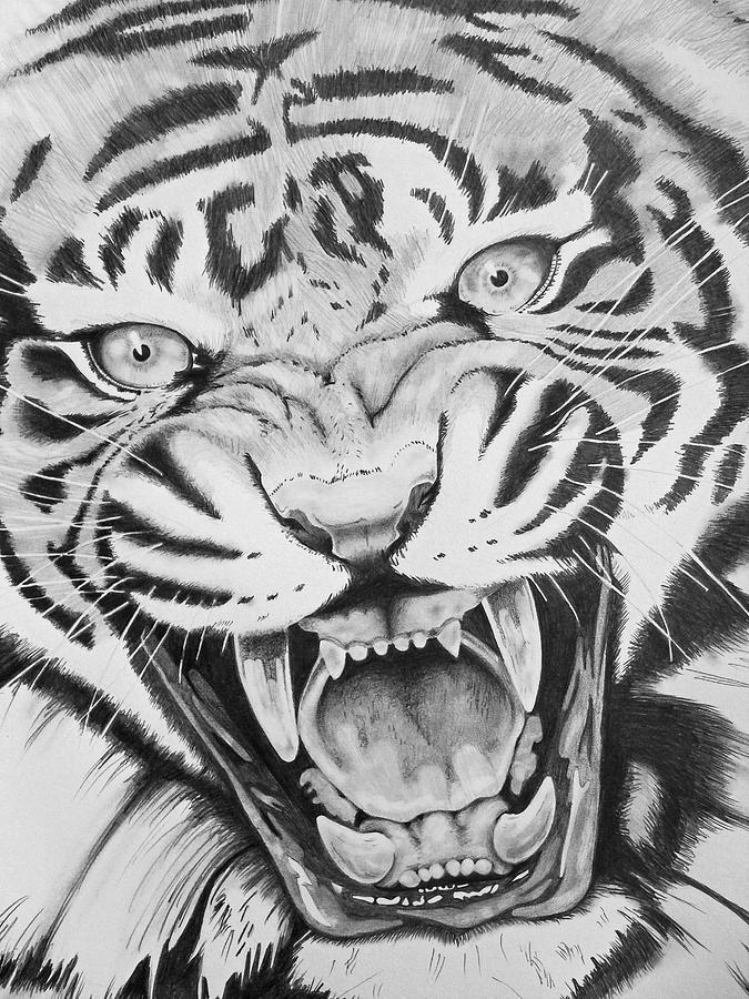 Aggression Drawing - Aggression by Joseph Palotas