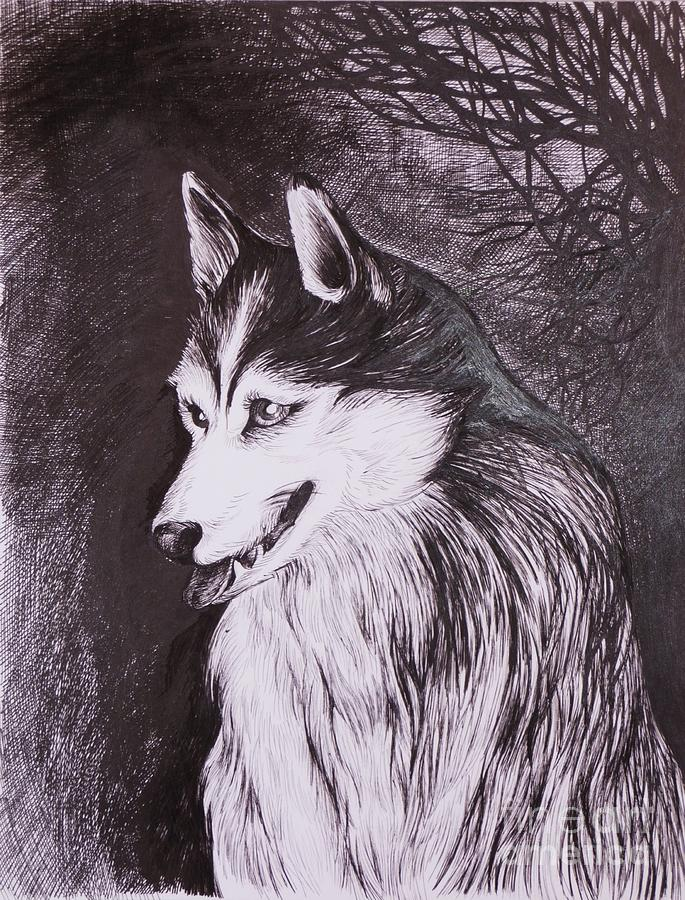 Pen And Ink Drawing - Akela by Anna  Duyunova