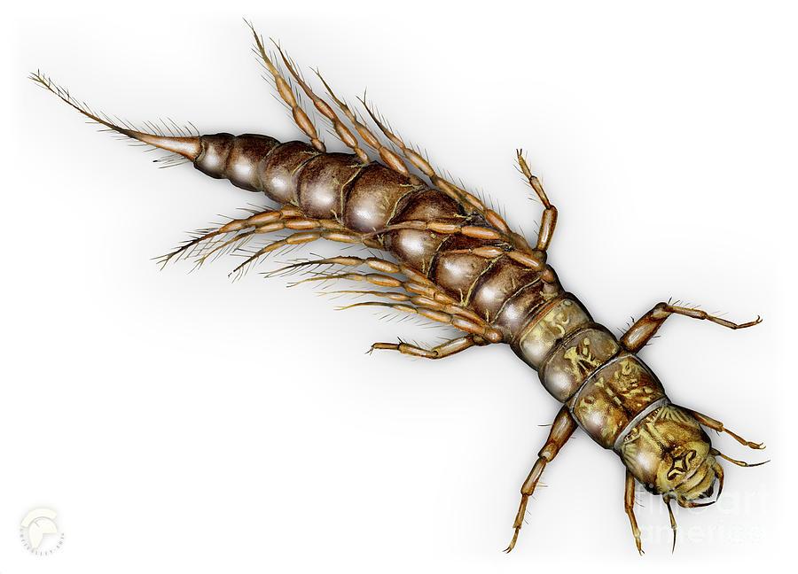 Alderfly Sialis Lutaria Larva Nymph -  Sialis De La Vase - Mudde Painting