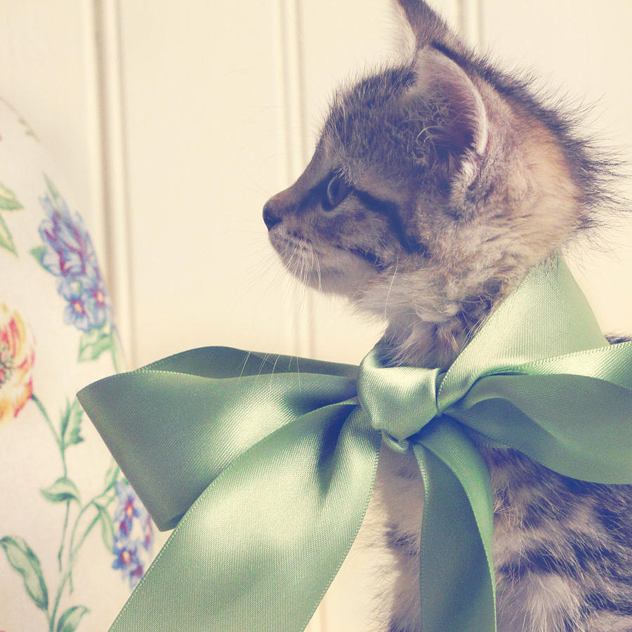 Kitten Photograph - All Dressed Up by Amy Tyler