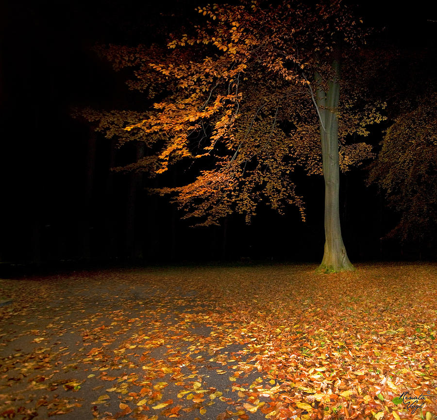 Baum Photograph - Alleine by Renata Vogl