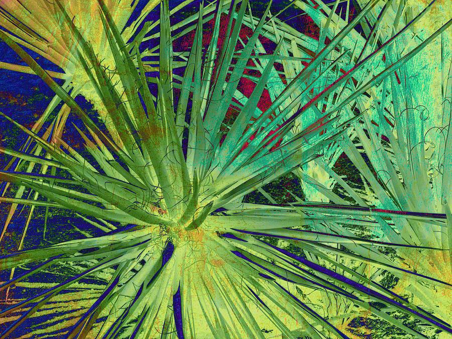 Aloe Vera Plant Photograph