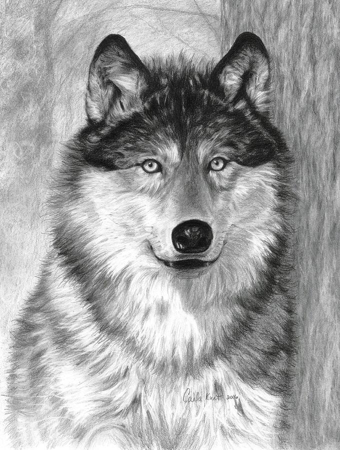 Wolf Drawing - Alpha by Carla Kurt