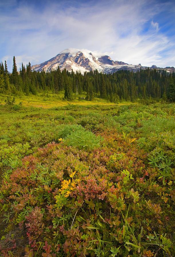 Mt. Rainier Photograph - Alpine Meadows by Mike  Dawson