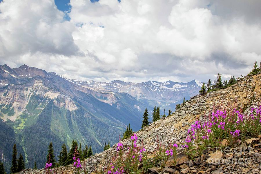 Alpine Wildflower Mountains Photograph