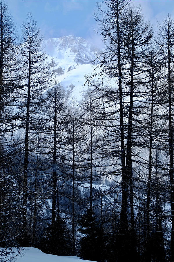 Alps And Tall Pine Trees Photograph