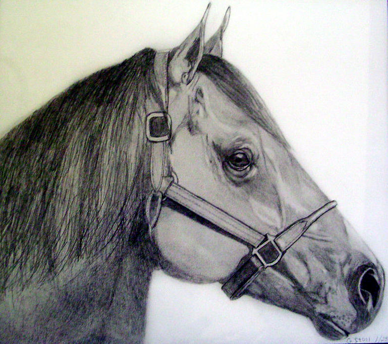 Print Drawing - American Quarter Horse by Gary Stull