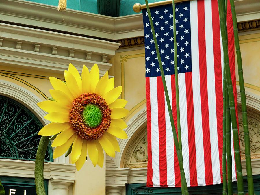 America Photograph - American Sunflower by Rae Tucker