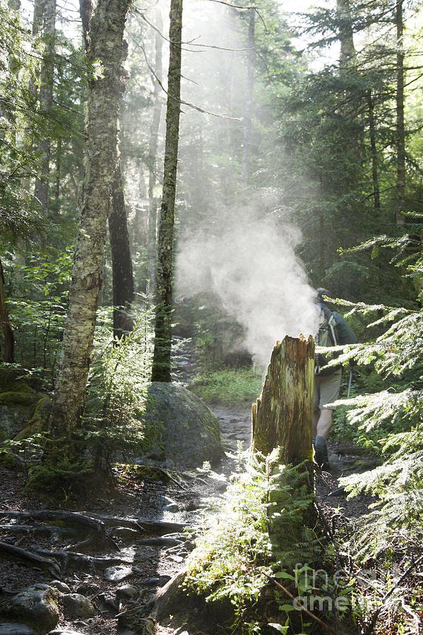 Ammonoosuc Ravine Trail - White Mountains New Hampshire Usa Photograph