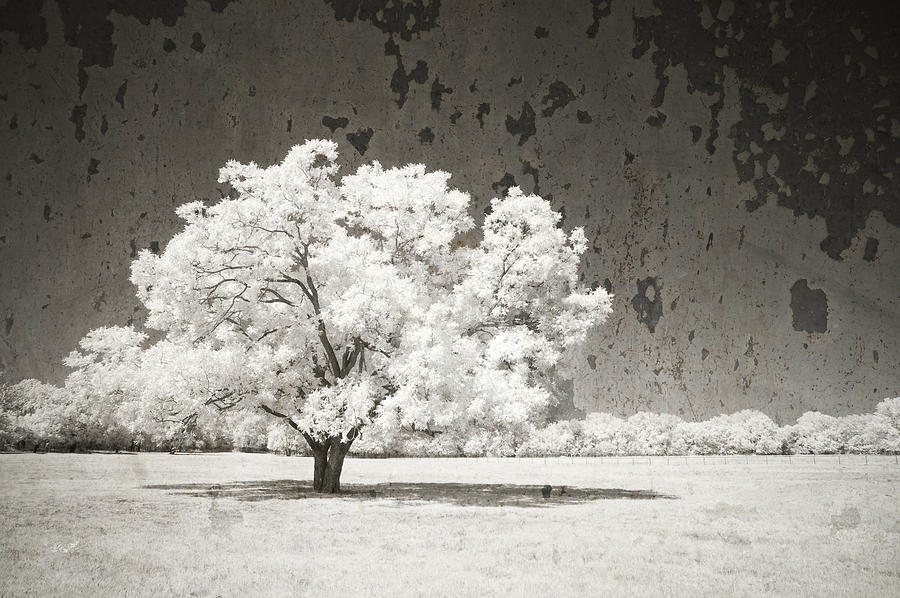 Nature Photograph - An Altered State by Mike Irwin