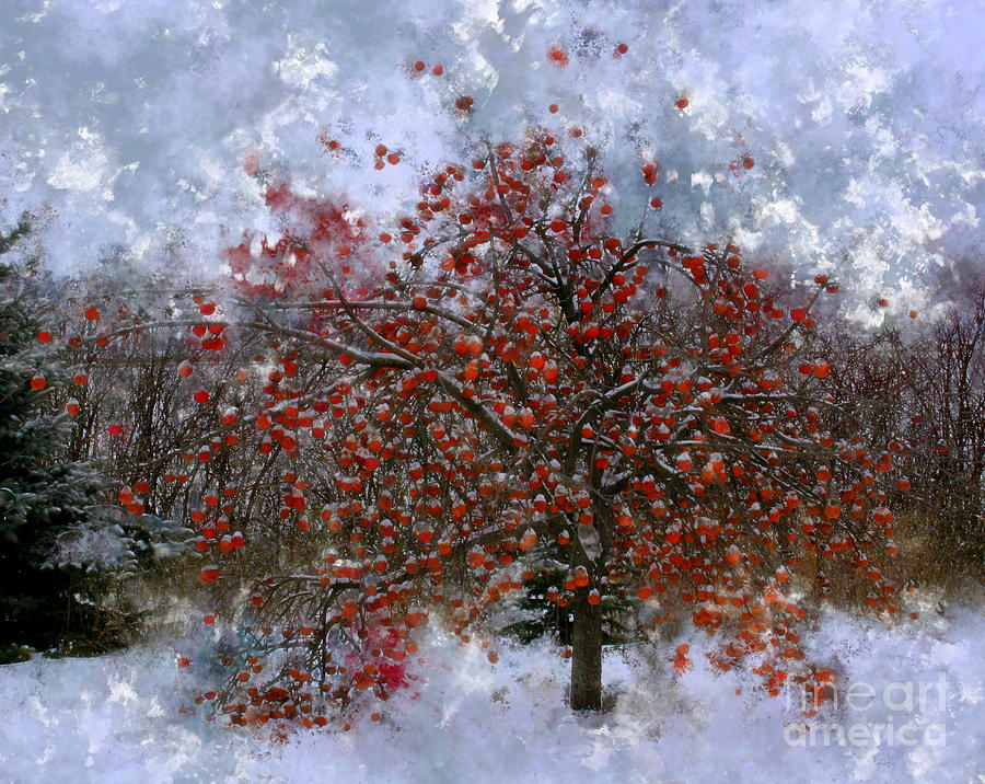 Apple Tree Photograph - An Apple Of A Day by Julie Lueders