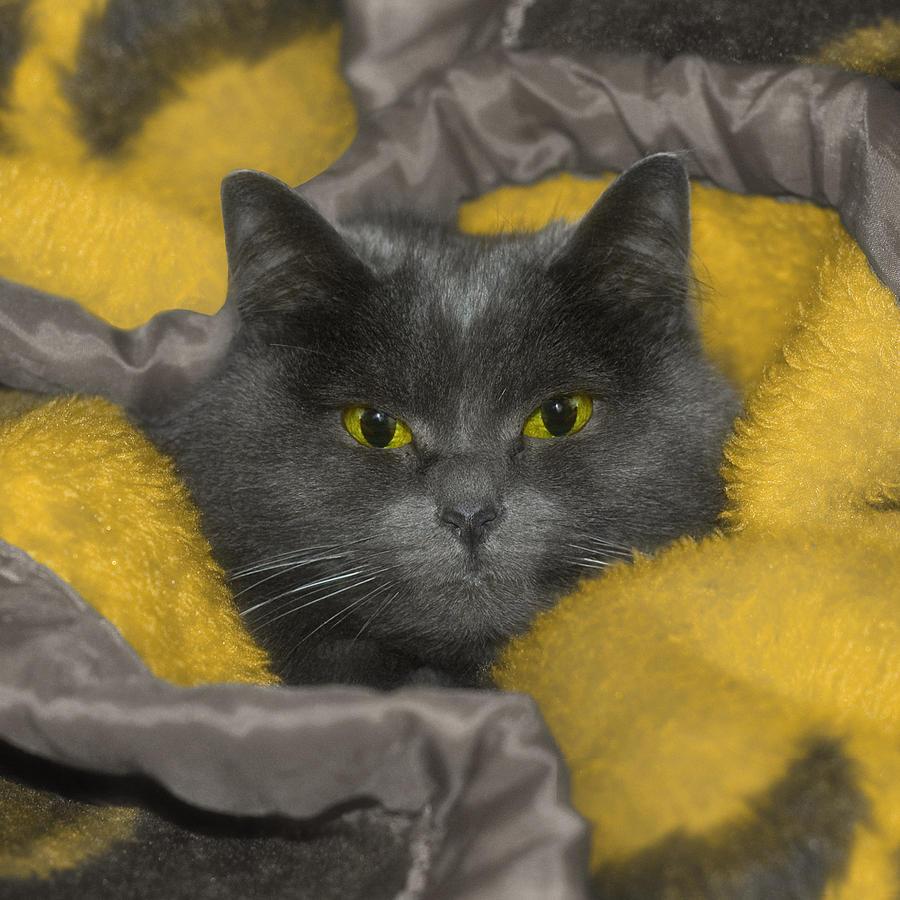 Feline Photograph - Angel Eyes by Joann Vitali