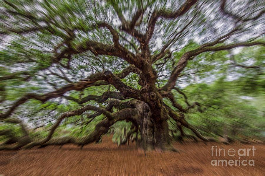 Angel Oak Tree Zoom Photograph