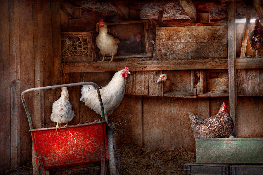 Chicken Photograph - Animal - Chicken - The Duck Is A Spy  by Mike Savad
