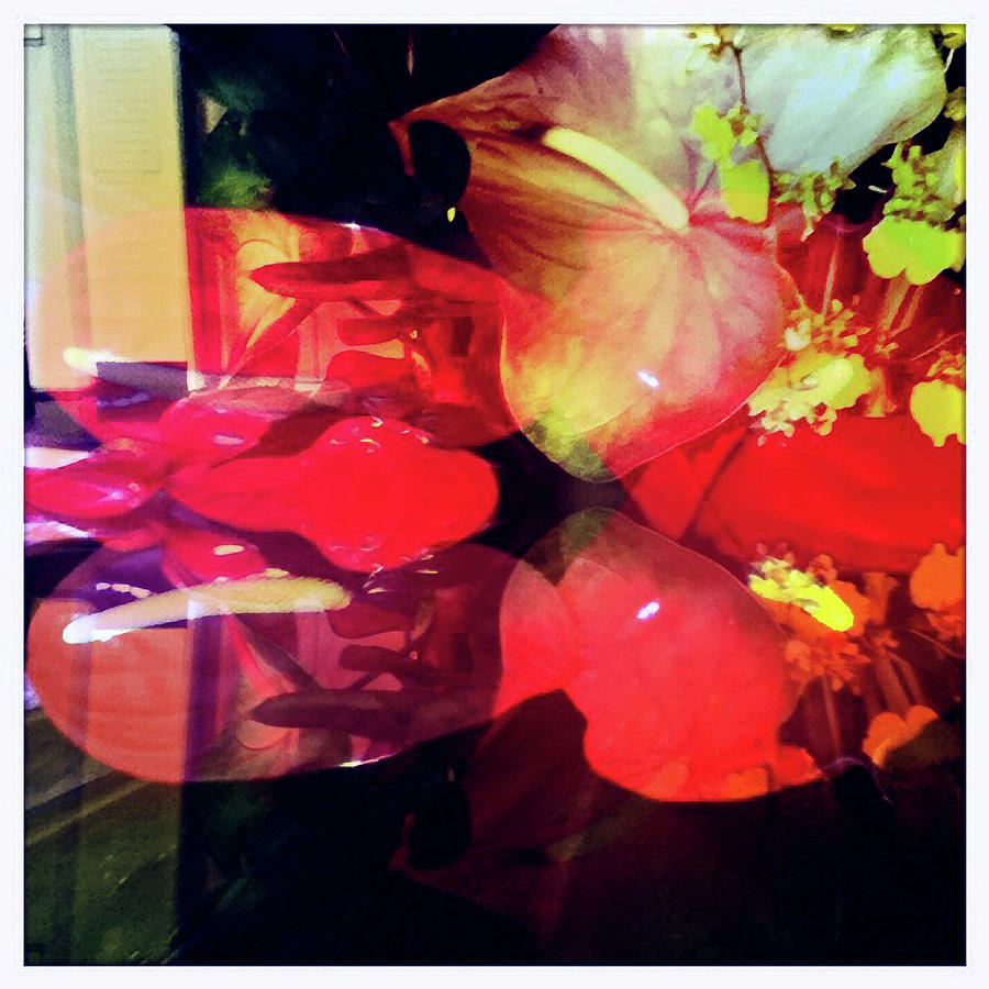 Anthurium Photograph - Anthurium Fantasy 2 by Ann Tracy