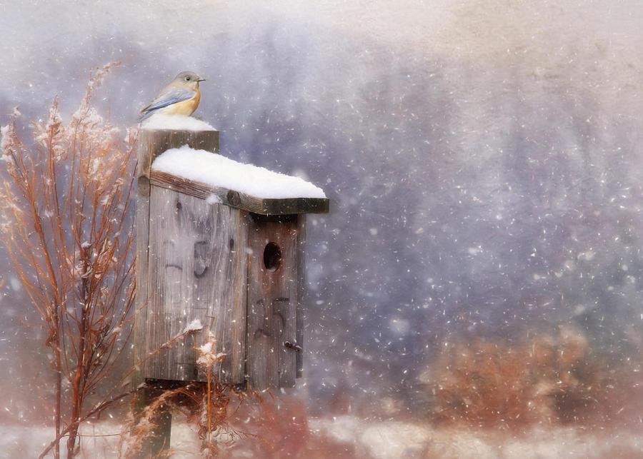 Bird Photograph - Apartment 25 by Lori Deiter