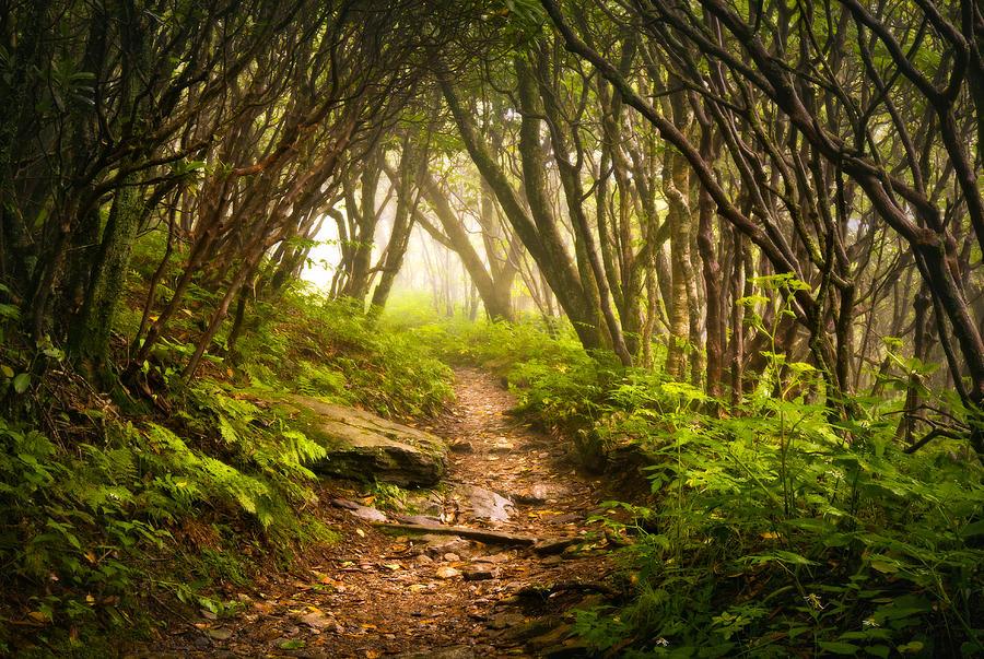 Appalachian Hiking Trail - Blue Ridge Mountains Forest Fog Nature Landscape Photograph