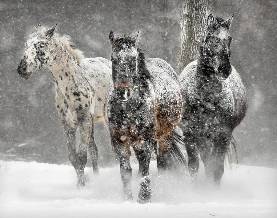 Appaloosa Photograph - Appaloosa Winter by Wade Aiken