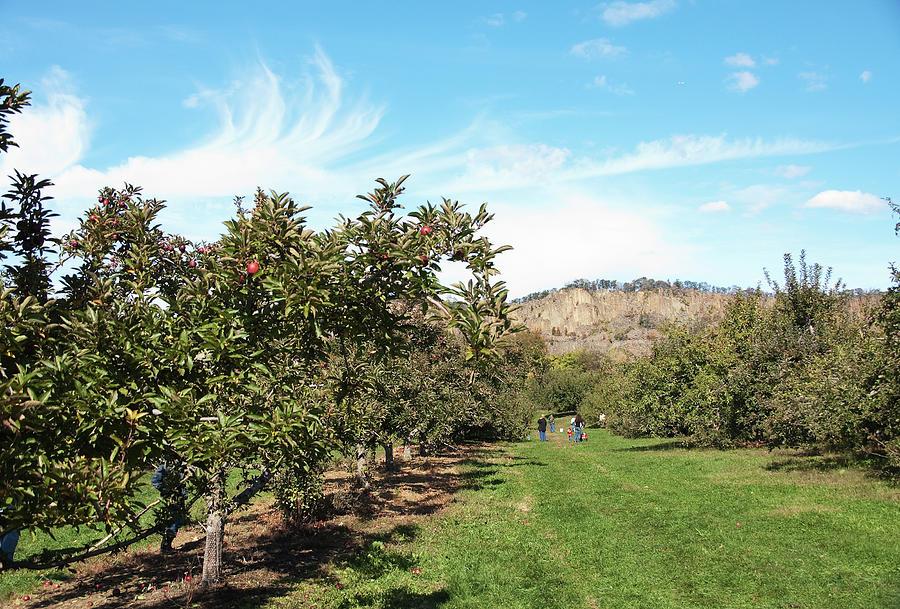 Apple Picking Photograph
