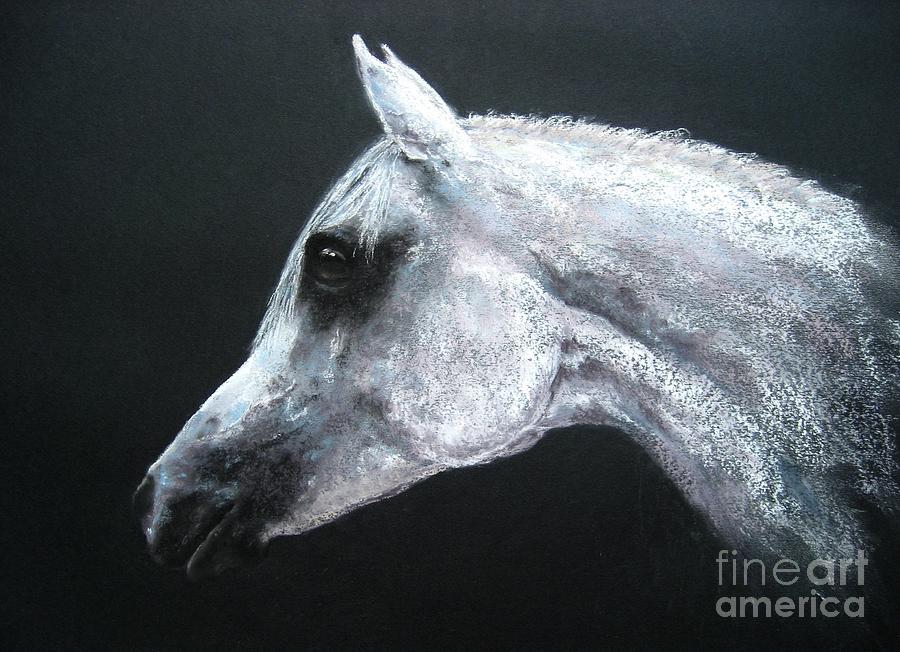 Horse Drawing - Arabian King by Sabina Haas