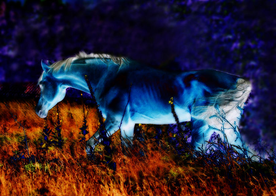 Digital Art Photograph - Arabian Stallion by ELA-EquusArt