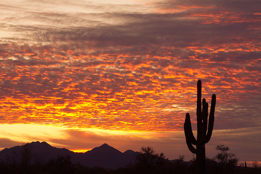 Arizona November Sunrise With Saguaro Photograph