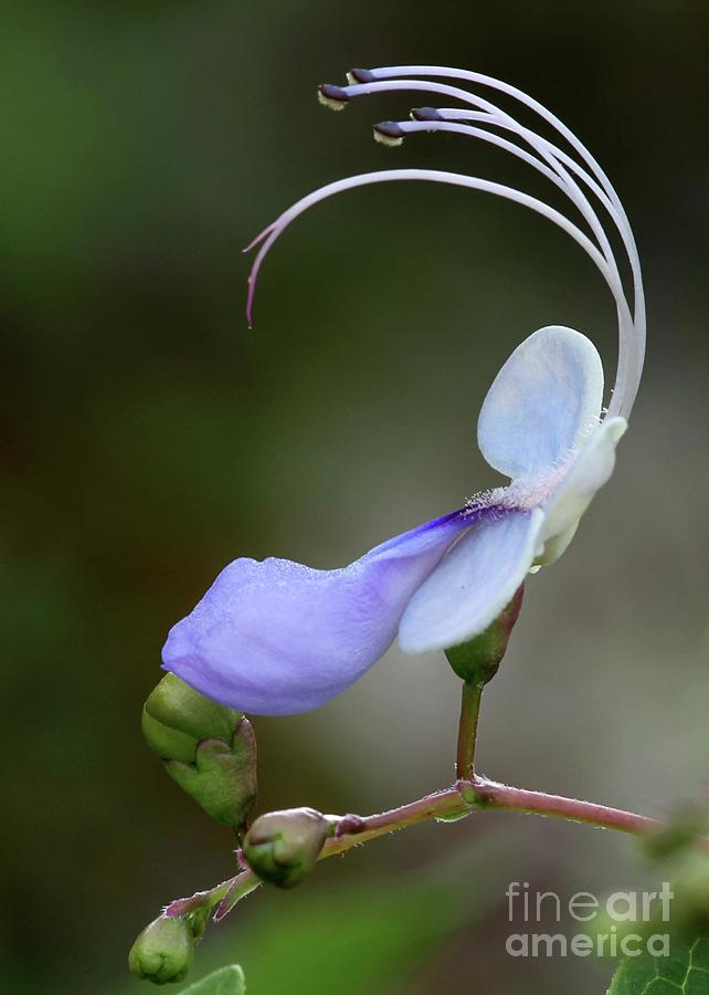 Flower Photograph - Art In Nature by Sabrina L Ryan