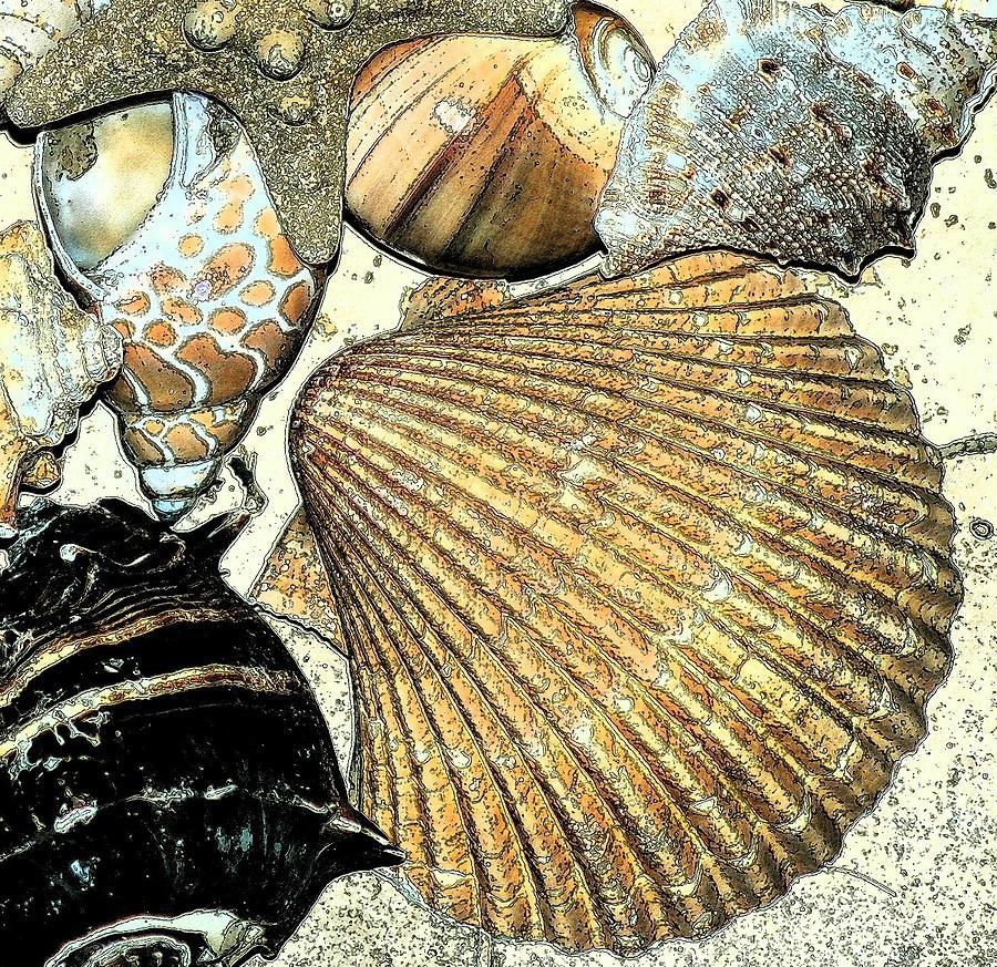 Seashell Photograph - Art Shell 2 by Stephanie Troxell