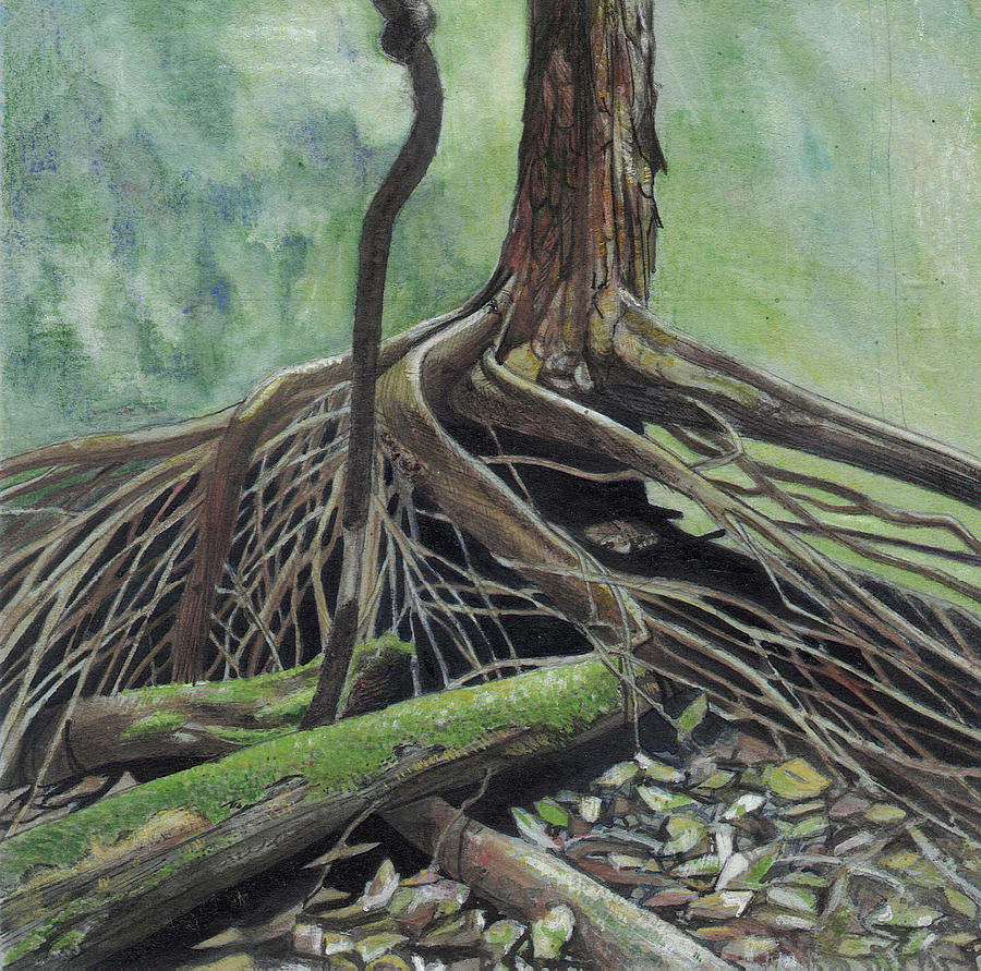 Watercolor Arvore Tree Paper Botanic Roots Painting - Arvore by Nelson Caramico