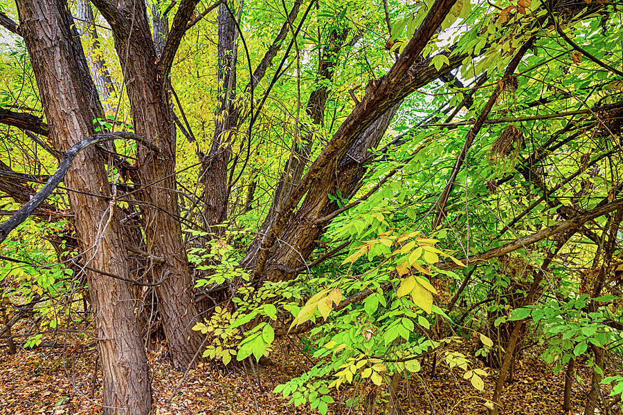 As The Seasons Turn Photograph