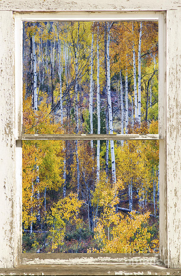Aspen Tree Magic Cottonwood Pass White Farm House Window Art Photograph