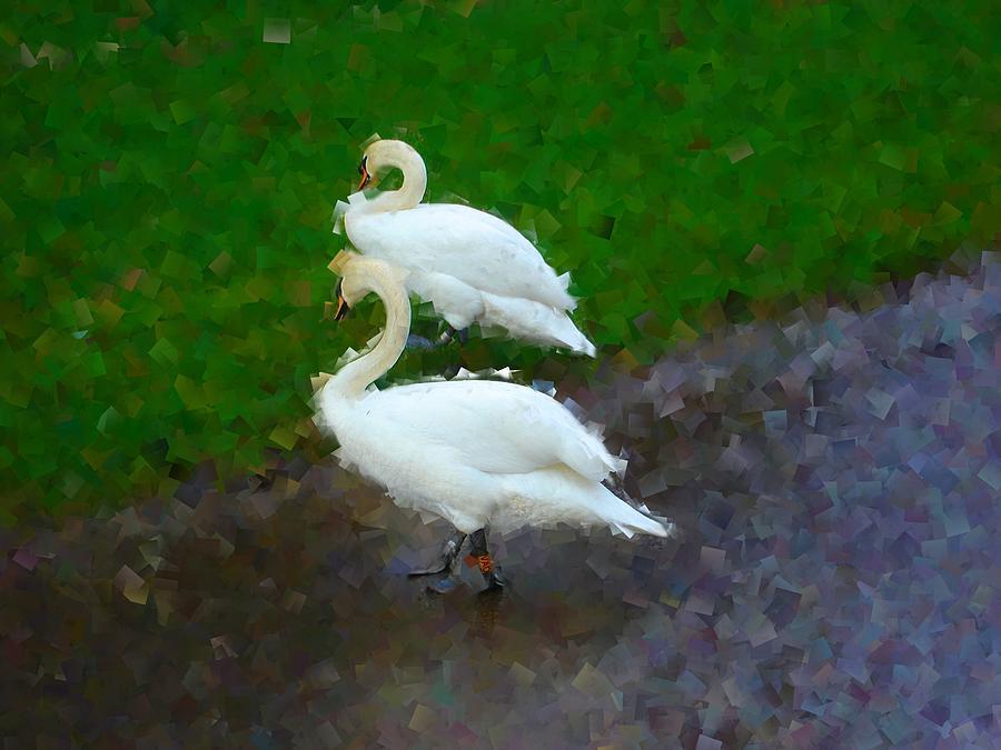 Swans Photograph - Asymmetry by Roberto Alamino