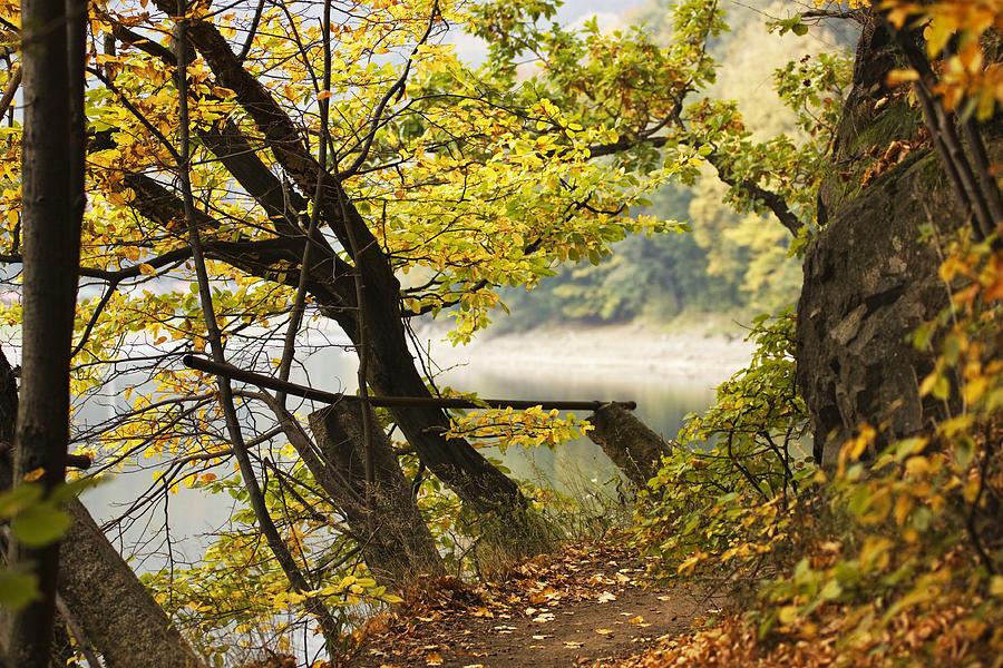Park Photograph - Autumn 9 by Dominika Aniola