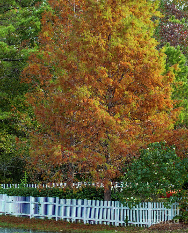 Autumn Abounds Photograph