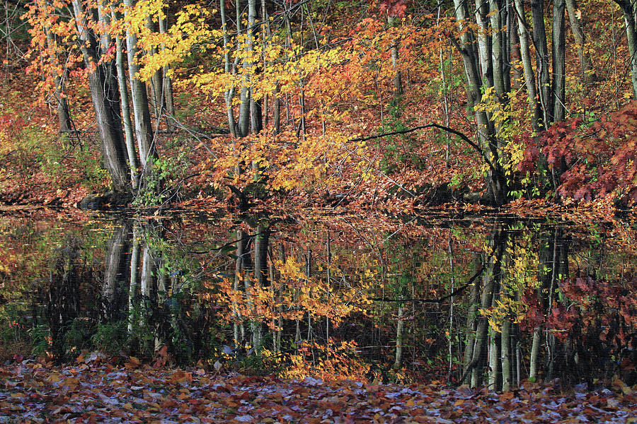 Autumn Photograph - Autumn Colors Reflect by Karol Livote