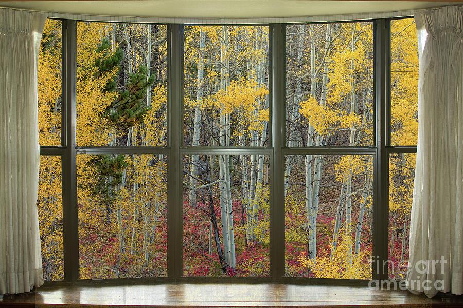 Autumn Forest Red Wilderness Floor Bay Window View Photograph