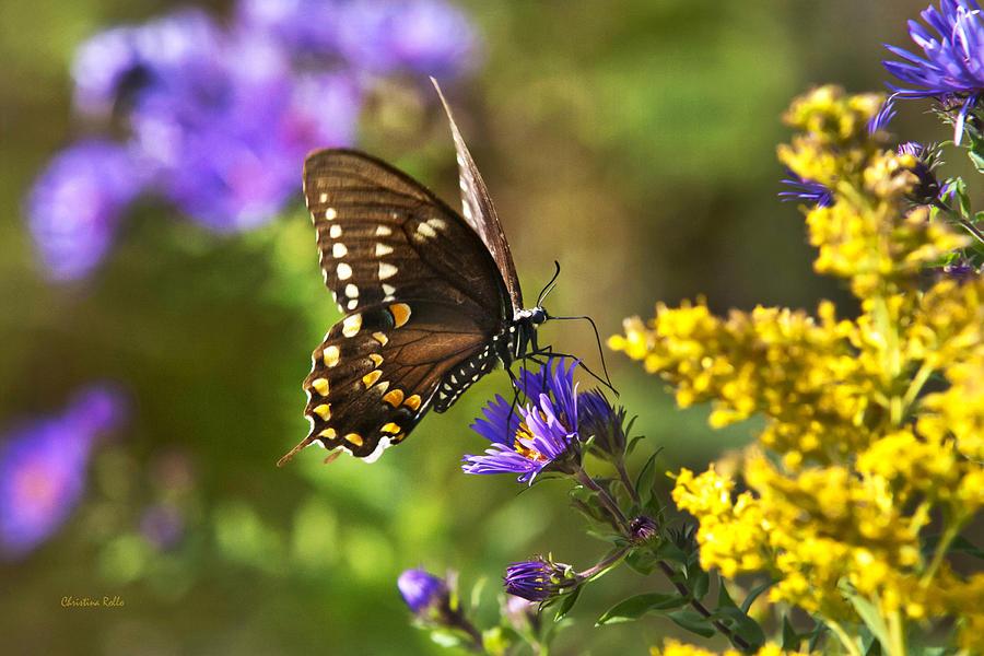 Autumn Photograph - Autumn Garden Butterfly by Christina Rollo