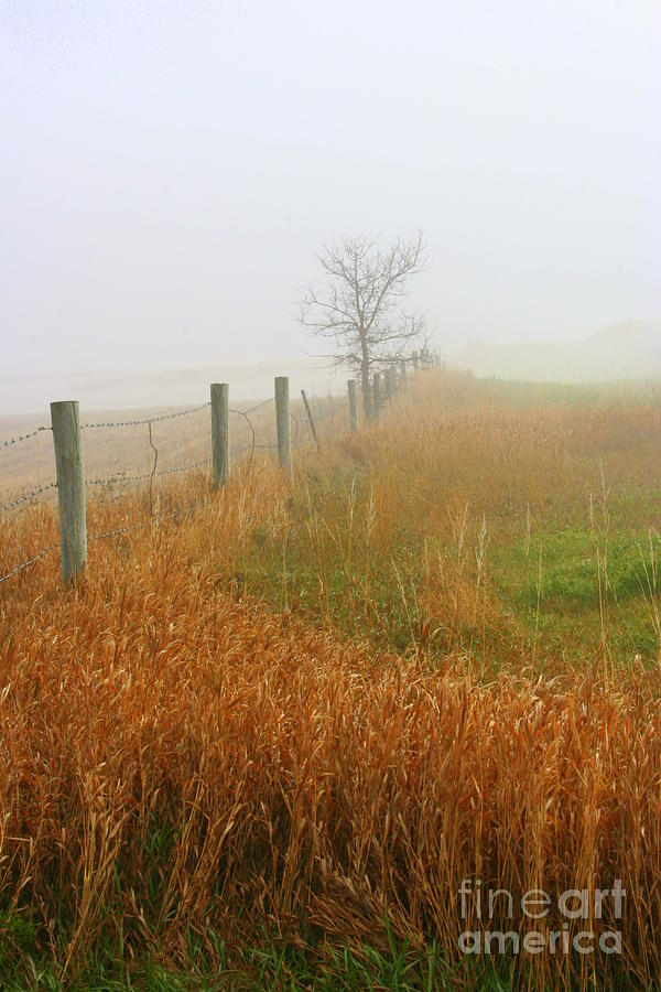 Fall Foggy Morning Photograph - Autumn Grasses by Julie Lueders
