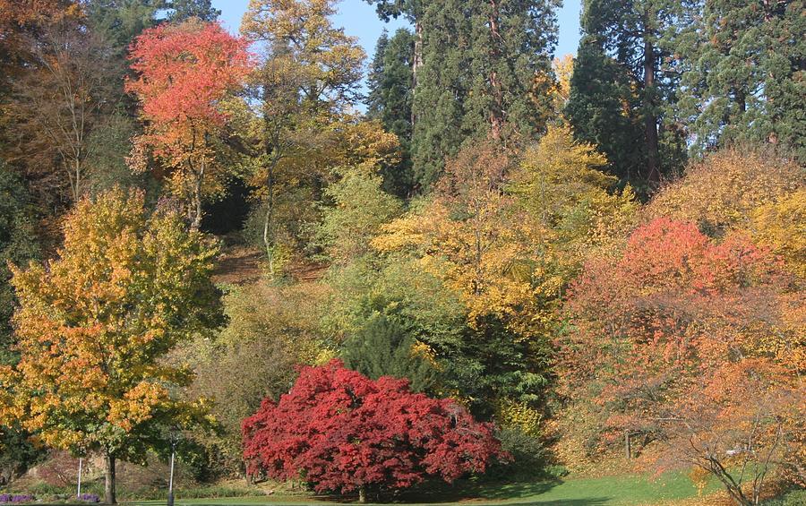 Autumn In Baden Baden Photograph